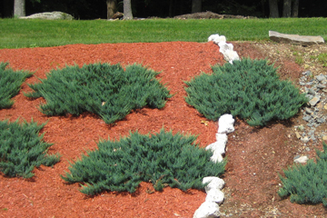 Keep your yard looking fresh with proper mulch installation and maintenance.