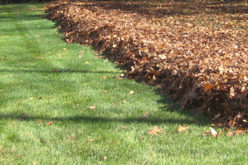 Fall leaf, stick, and debris cleanup and removal. Spring & Fall clean up.